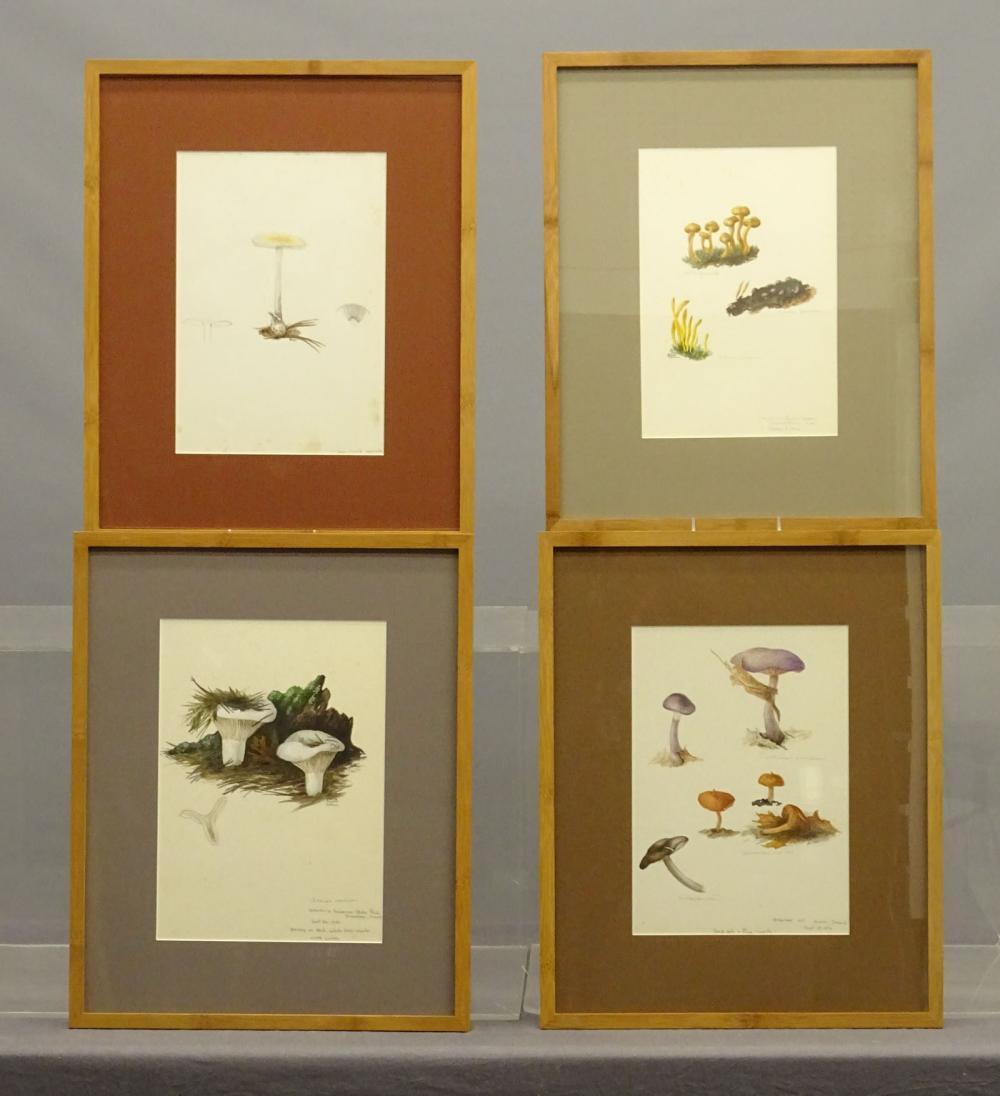 Original Botanical Watercolors