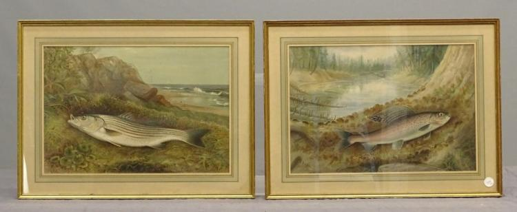 Pair Early Fish Prints By Kilbourne