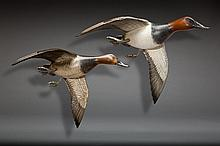 Flying Canvasback Pair