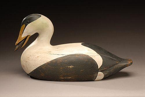 Muller Eider Decoy with Mussel in its Mouth
