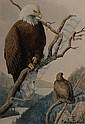 Fuertes Watercolor Painting American Eagles, Louis Agassiz Fuertes, Click for value