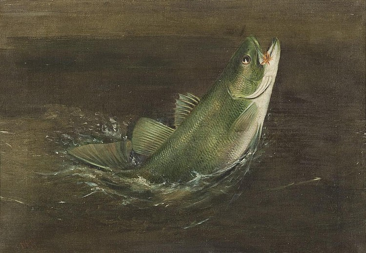 Harry A. Driscole (1861-1923) Bass Rising, Oil on canvas, 14 by 19.25 inches