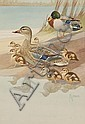 Francis Lee Jaques (1887-1969) Mallard Family, Watercolor, 13 by 9 inches, Francis Lee Jaques, Click for value