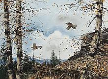 Ruffed Grouse In Flight