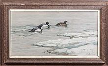 Bluebills in the Ice
