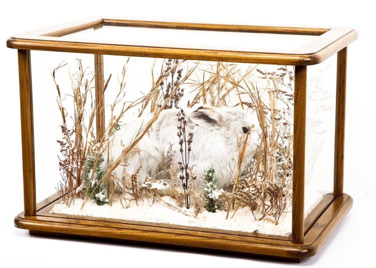 Snowshoe Hare Full Body Mount Under Glass