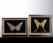TWO LARGE BUTTERFLIES
