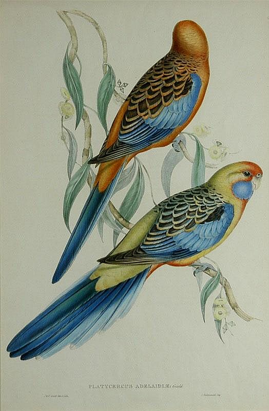 GOULD, John (1804-1881) ( & Elizabeth)