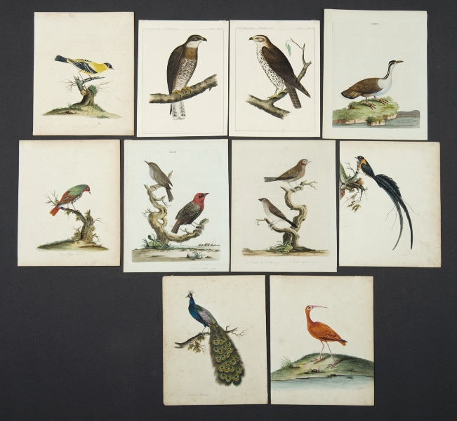 William HAYES Bird Plates.  6 var plates hand coloured by the Hayes family. 4 signed. Also 3 plates by Peter BROWN from 'New Illustrations of Zoology,' pub. 1776. Plus 2 bird chromolithographs from U.S.P.R.R. Expedition.Hand Coloured Engraving (7)27x21cm (sheet)