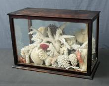 19th C Vitrine of Coral & Artefacts.  Collection of many coral varieties & Pacific artefacts, incl. scrimshaw nautilus & nautilus basket. Also a lime spatula, finely caned hair comb & carved stone water dropper. Provenance: Collected by Pacific & Eastern Ship's captain, William Spence prior to 1895. Thence via family to now.