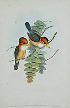 GOULD, John (1804-1881)  & H C Richter