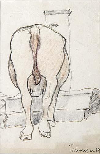 August Trümper (* Altona 1874)Kuh von hinten an