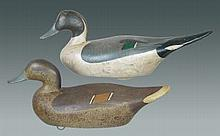 Pair of Pintails by Madison Mitchell