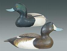 Pair of Bluebills by Ward Brothers