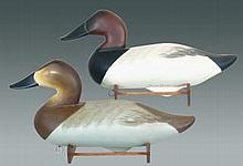 Joiner Canvasback Pair