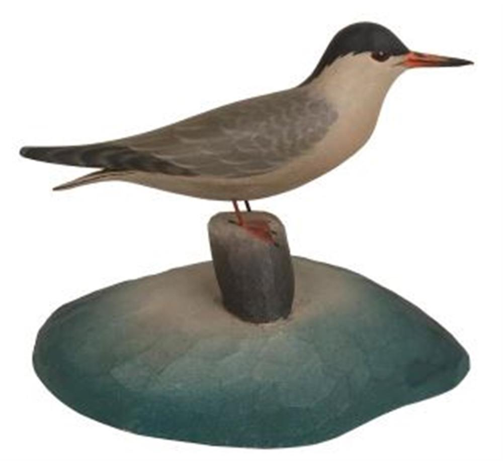 Miniature Black Capped Tern on a Piling by Crowell