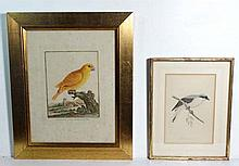 Ornithology Two hand coloured and framed birds