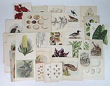 A large quantity of assorted natural history