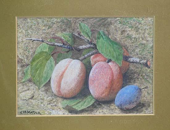 Charles Henry Slater (1820-1890) Watercolour Still