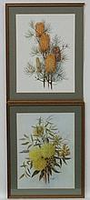 Daisy Wood  (1894-?) Australian Botanical School, Watercolours ,  a pair, F