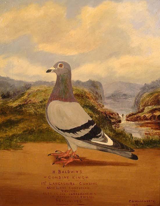 C H Wadsworth 1913 Oil on canvas Pigeon Portrait
