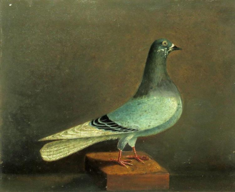 British School 19th Century Prize Pigeons: A Pair