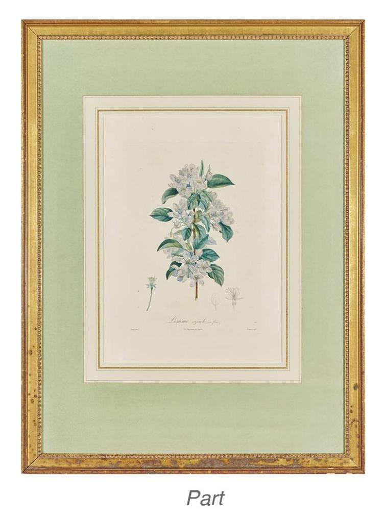 After Pierre-Joseph Redoute [FLOWER STUDIES] Six hand-colored color stipple engravings