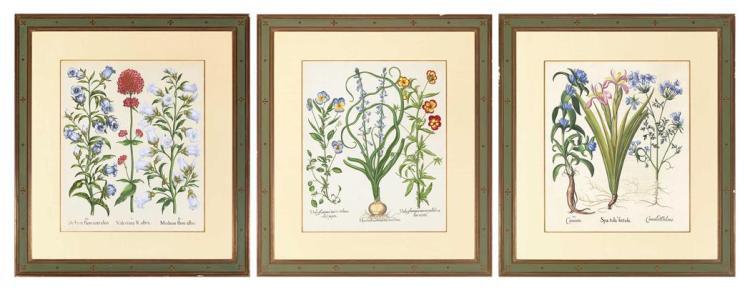 Basilius Besler HYACINTHUS EROTINUS MAXIMUS; SPATULA FOETIDA; VALERIANA RUBRA Three hand-colored engravings