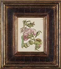 Maria Sybilla Merian (1647-1717) [CATERPILLER STUDIES] Four hand-colored engravings