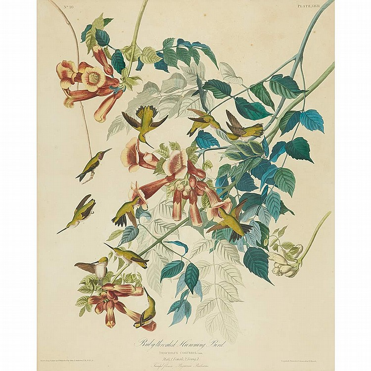 After John James Audubon RUBY-THROATED HUMMINGBIRD Hand-colored etching, engraving and aquatint by R. Havell, 1828, with t...