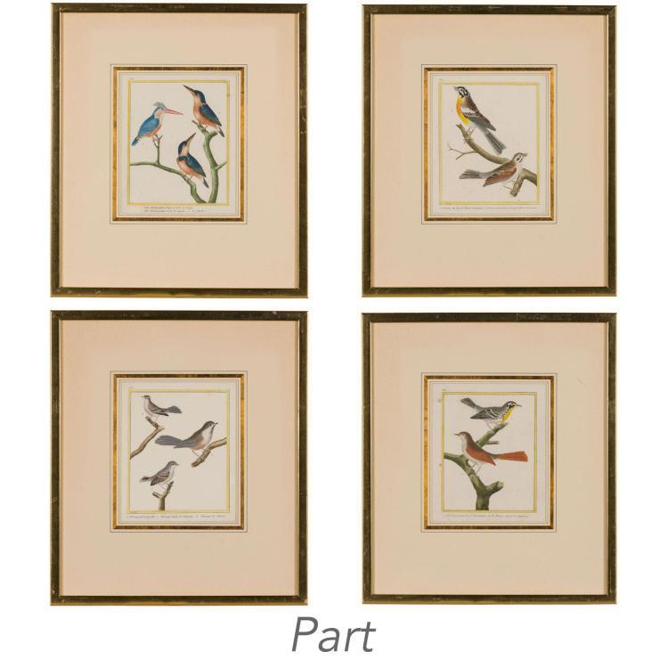 After Francois Martinet [BIRD STUDIES] Thirteen hand-colored engravings, from Buffon, Histoire Naturelle des Oiseaux