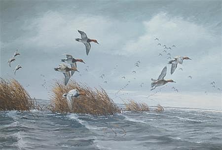 David A. Maass American, b. 1929 Canvasbacks on a Gray Day