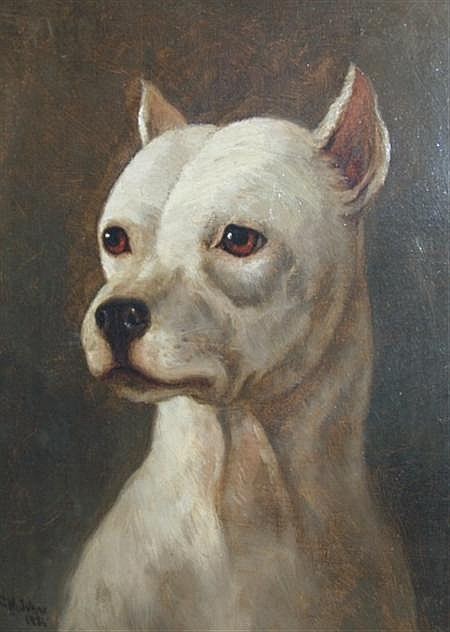 Clarence M. Johns American, 1843-1925 Portrait of a Bull Terrier, 1886
