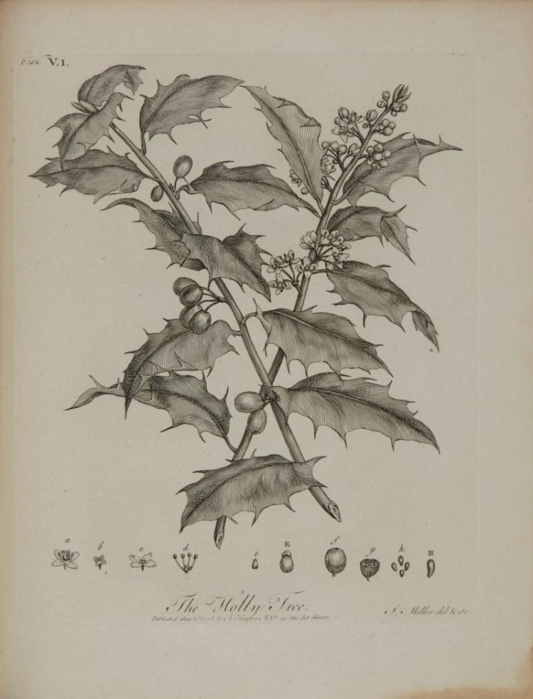 [NATURAL HISTORY] Group of titles, comprising EVELYN, JOHN. Silva; or, a Discourse on Forest-Trees, York, 1786, a new...