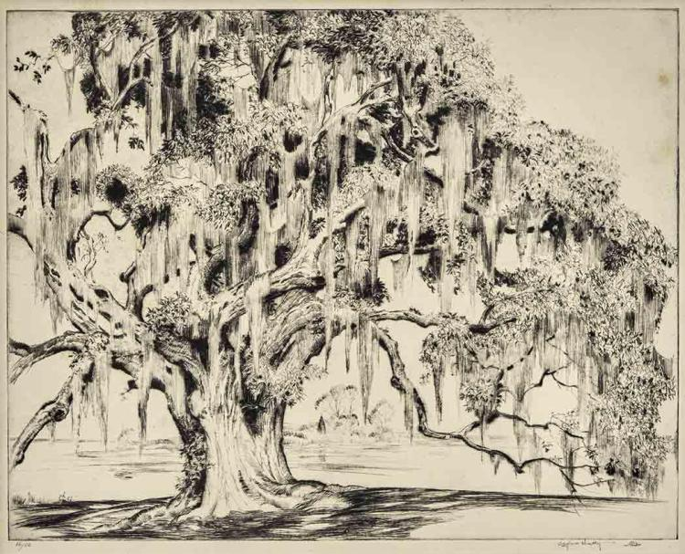 Alfred Heber Hutty AN ANCIENT OAK Drypoint