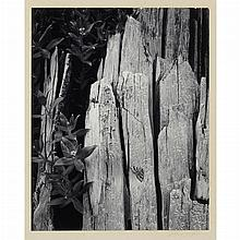 ADAMS, ANSEL (1902-1984) Pair of photographs by Ansel Adams from Portfolio 2, 1950, including [Forest, early morning, Mount Rainier ...