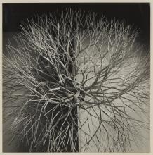 CUNNINGHAM, IMOGEN (1883-1976) Ruth Asawa''s New Expression with Metal, 1963.