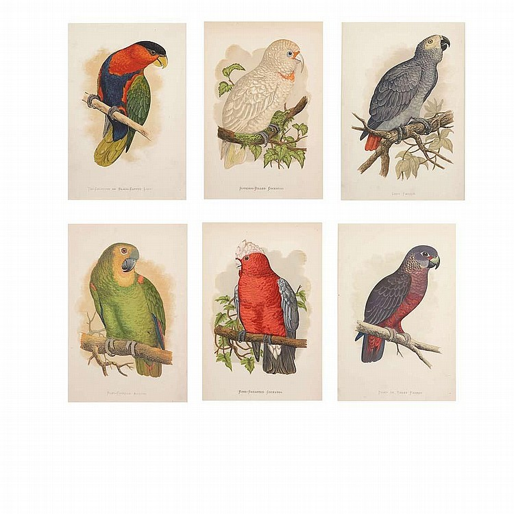Alexander Francis Lydon [PARROT STUDIES] Six hand-colored lithographs