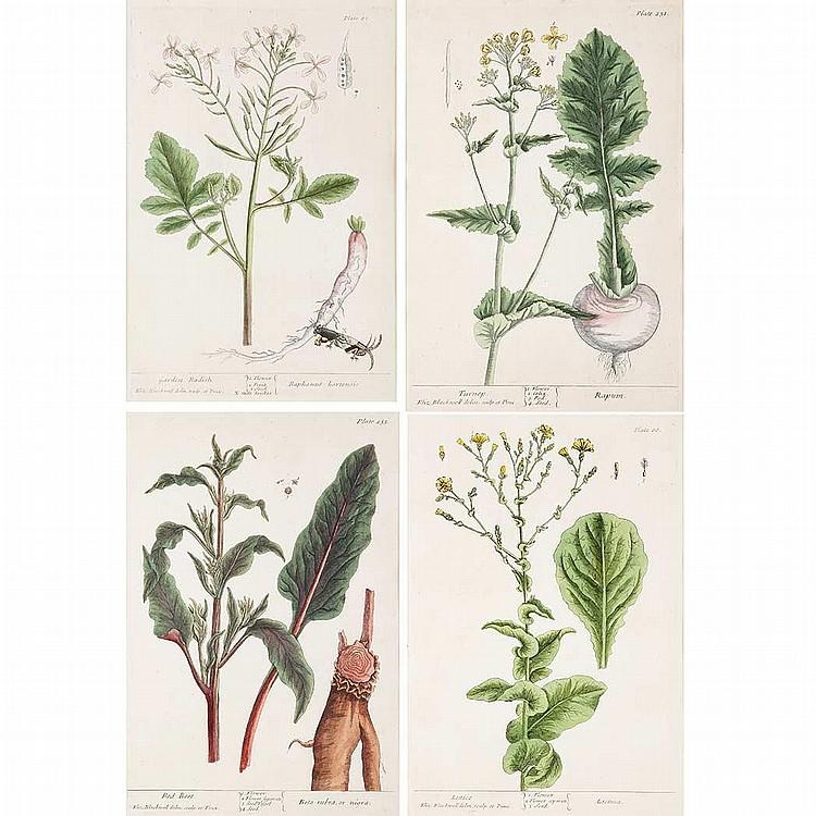 Elizabeth Blackwell [PLANT STUDIES] Four hand-colored engravings