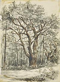 """Thaut, Johannes. 1921 - 1987 Radebeul""""Bäume im Wind"""". 1954. Aquarell über Tuschzeichnung, re. u. sign. und dat., verso Klebeetikett mit Titel,"""