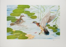 Signed Brown Flying Duck Lithograph