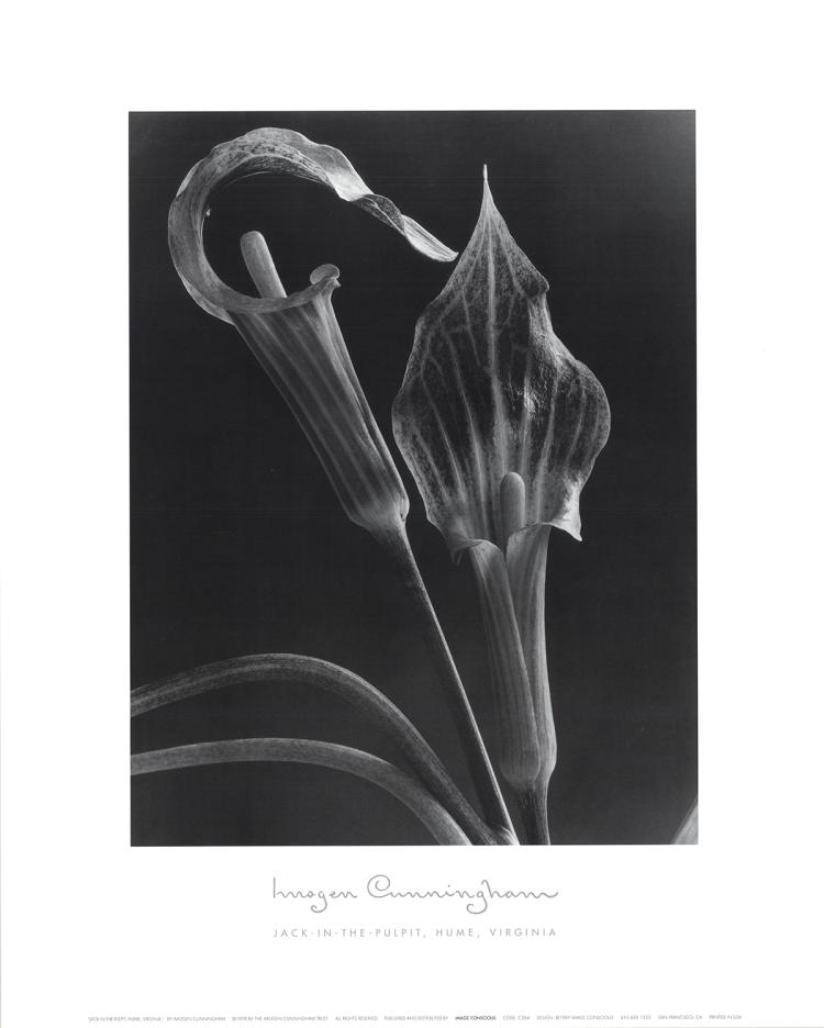 Imogen Cunningham - Jack-In-the-Pulpit - 1997