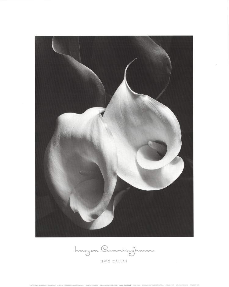 Imogen Cunningham - Two Callas - 1997