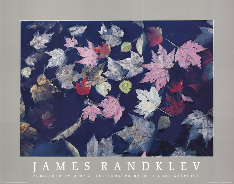 James Randklev - Pool of Leaves - 1982