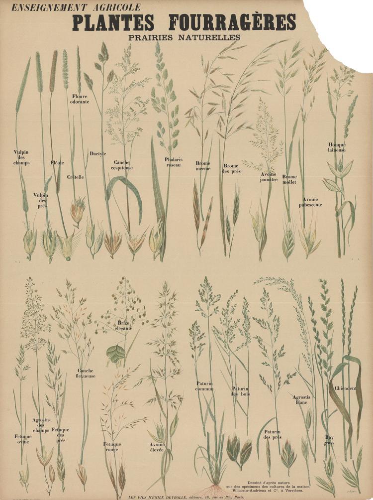 Emile Deyrolle - Plantes Fourrageres Teaching Chart
