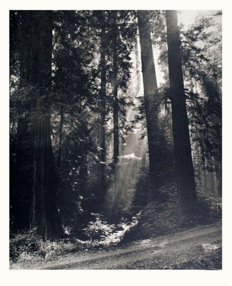 N.R. Farbman - Redwood Forest - 1972
