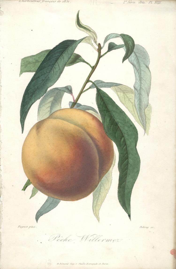 Francois Herincq - P?che Willermoz - 1861