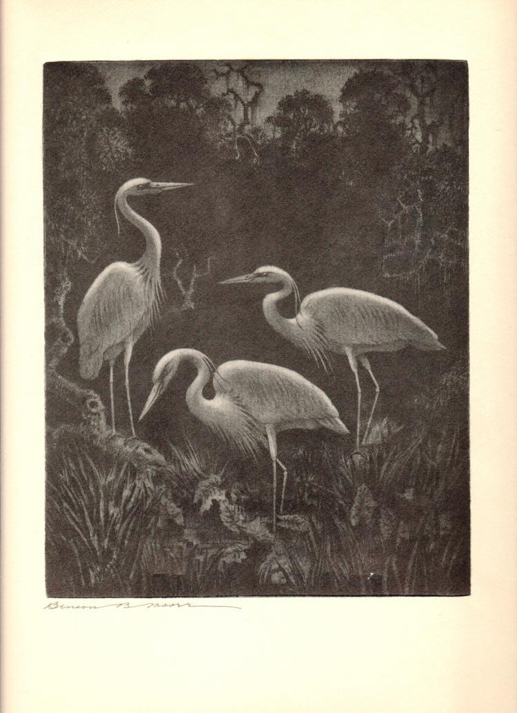 Benson B Moore - White Herons at Home - 1936