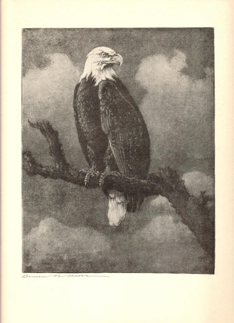 Benson B Moore - American Bald Eagle - 1936