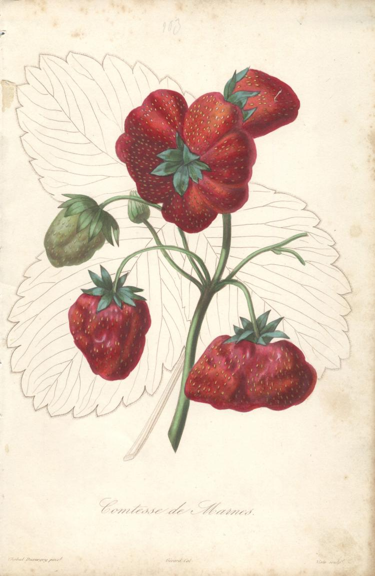 Francois Herincq - Comtesse de Marmes
